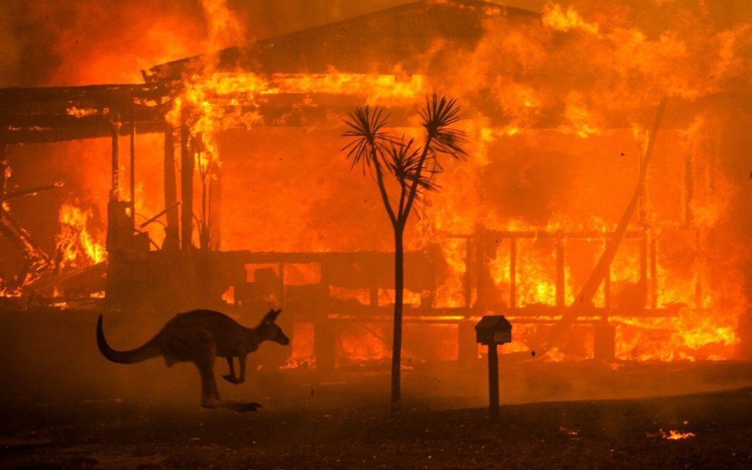 INCENDIOS EN AUSTRALIA: ENTERÁTE CÓMO AYUDAR